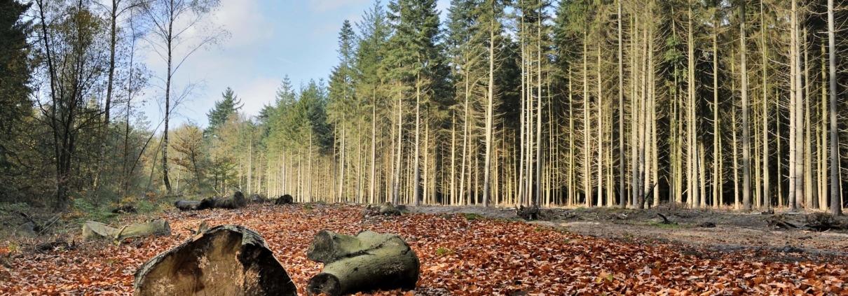 Ruil en verwerving natuurgronden